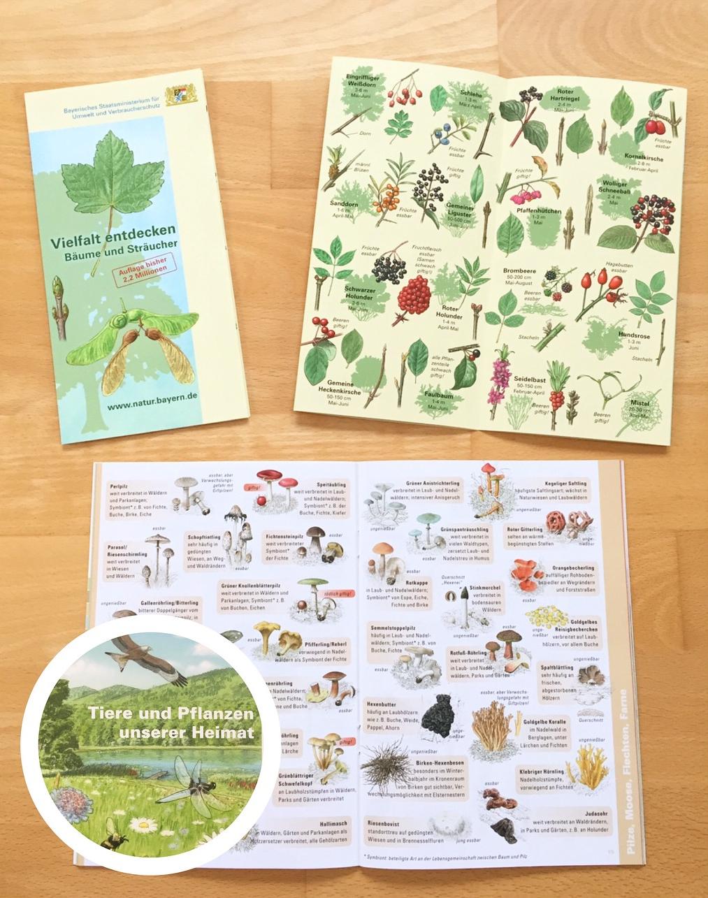 KOSTENLOS: Material zum Thema Wald