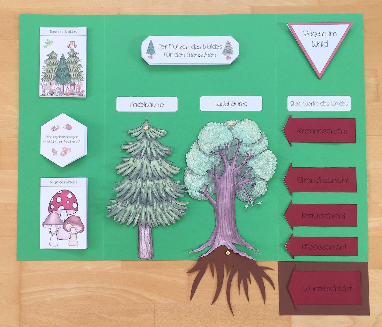 Wald Lapbook im Sachunterricht